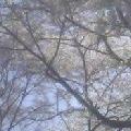 image/sketch-book-2006-04-03T21:19:22-1.data