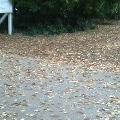 枯れ葉.jpg